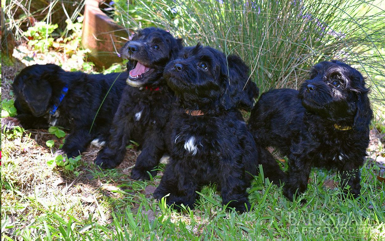 GiGi & Muddy Puppies